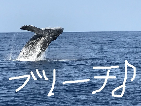 okinawa-whale-watching-blow-peduncle-arch-fluke-up-down-pec-slap-flipper-flopping-spy-hop-tail-peduncle-breach.20171205_03.JPG