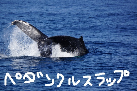 okinawa-whale-watching-blow-peduncle-arch-fluke-up-down-pec-slap-flipper-flopping-spy-hop-tail-peduncle-breach.20180305_05.JPG