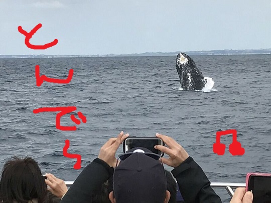 okinawa-whale-watching-blow-peduncle-arch-fluke-up-down-pec-slap-flipper-flopping-spy-hop-tail-peduncle-breach.20180312_05.jpeg