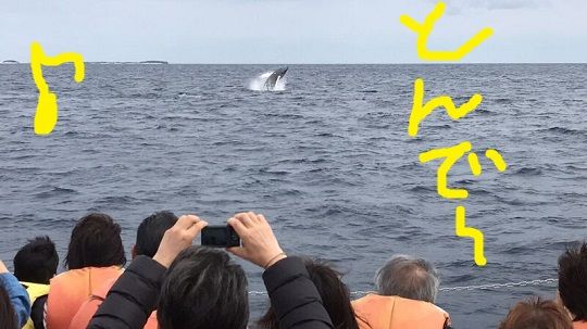 okinawa-whale-watching-blow-peduncle-arch-fluke-up-down-pec-slap-flipper-flopping-spy-hop-tail-peduncle-breach.20180312_06.jpeg