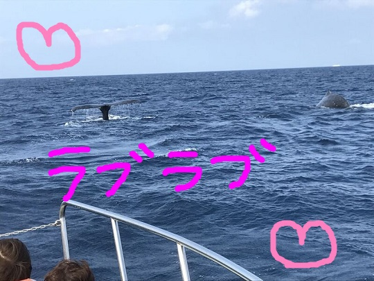 okinawa-whale-watching-blow-peduncle-arch-fluke-up-down-pec-slap-flipper-flopping-spy-hop-tail-peduncle-breach.20180315_04.jpeg