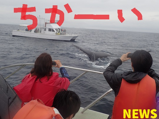 okinawa-whale-watching-blow-peduncle-arch-fluke-up-down-pec-slap-flipper-flopping-spy-hop-tail-peduncle-breach.2018031603.JPG