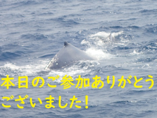 okinawa-whale-watching-blow-peduncle-arch-fluke-up-down-pec-slap-flipper-flopping-spy-hop-tail-peduncle-breach.20180323.07.JPG