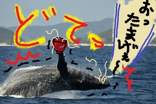 whale-watching-biow-pedauncle-arch-fluke-up-down-arch-fluke-up-down-pec-slap-flippsr-flopping-spy-hop-fail-peduncle-breach-20171218-01.png